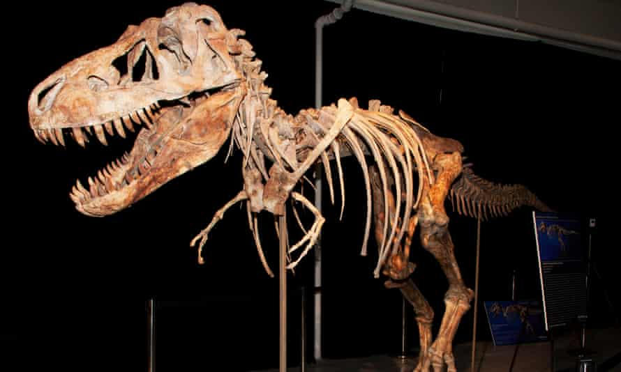 The skeleton of a Tyrannosaurus Bataar dinosaur