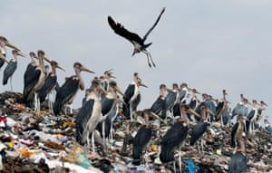 Marabou storks stand on a pile of plastic at the Dandora dumping site on the outskirts of the city, Nairobi, Kenya