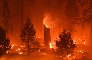 A burning tree emits embers as flames from the Caldor fire continue to burn in Twin Bridges, California