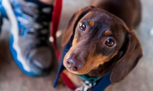 The grief of losing a pet is traumatic and universal  So why