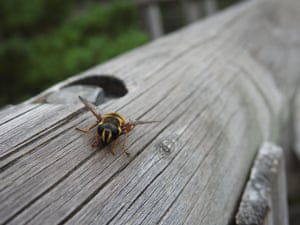 'A Bee Posing For The Camera.'