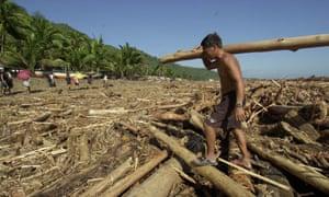 mexico illegal logging