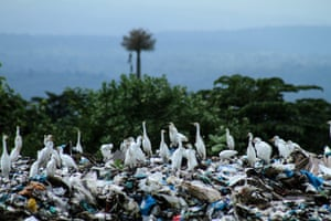A siege of herons looks for food among the waste at a landfill in Lhokseumawe, Aceh, Indonesia. Reports say plastic waste in Indonesia reaches 64m tons per year.