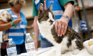Veterinarians with the California Veterinary Medical Reserve Corps treat a cat.