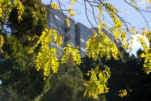 The foliage around the estate which residents cherish
