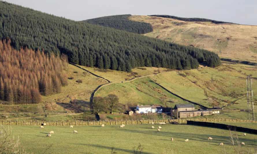 Ashstead Farmhouse