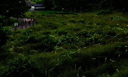 This long exposure picture taken on 16 June 2020 shows fireflies at Tatsuno Hotarudoyo Park in Tatsuno in Nagano Prefecture.