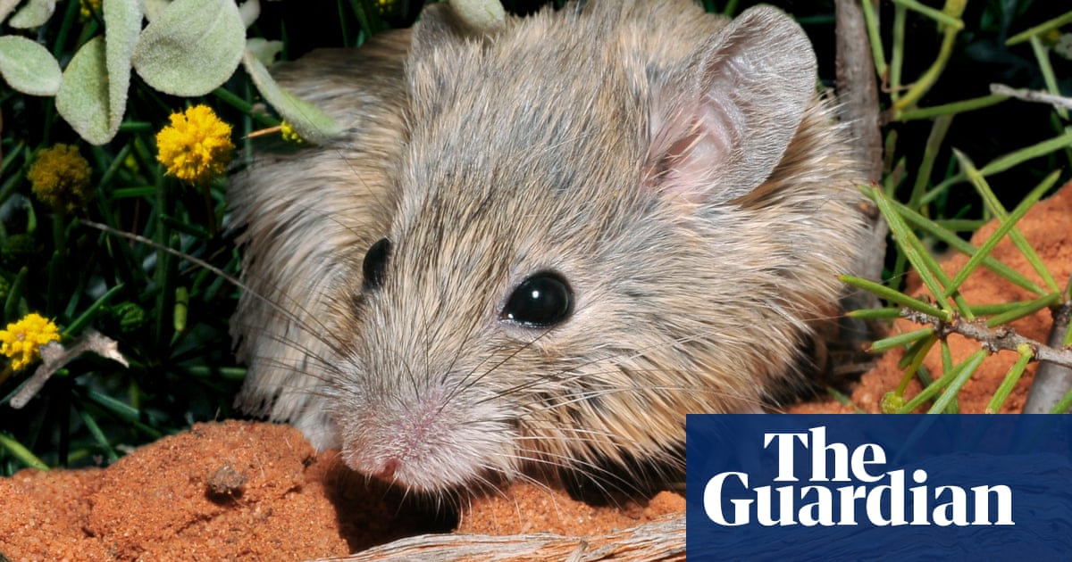 Native mouse believed to be extinct for 150 years found off Western Australia