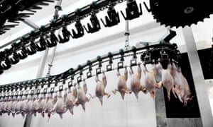 Food industry detail with poultry meat processingDJ3FW2 Food industry detail with poultry meat processing