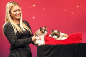Grumpy Cat is held by Bundesen as she regards her animatronic counterpart at Madame Tussauds in San Francisco in December 2015