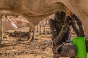 Nhial Pandiar, 12, milks a cow