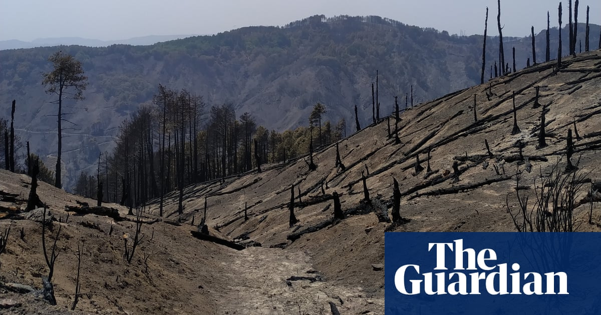 'All that's left are ashes': Italian communities count cost of wildfires