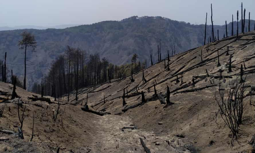 The aftermath of a wildfire in Calabria's Aspromonte mountain range, Italy