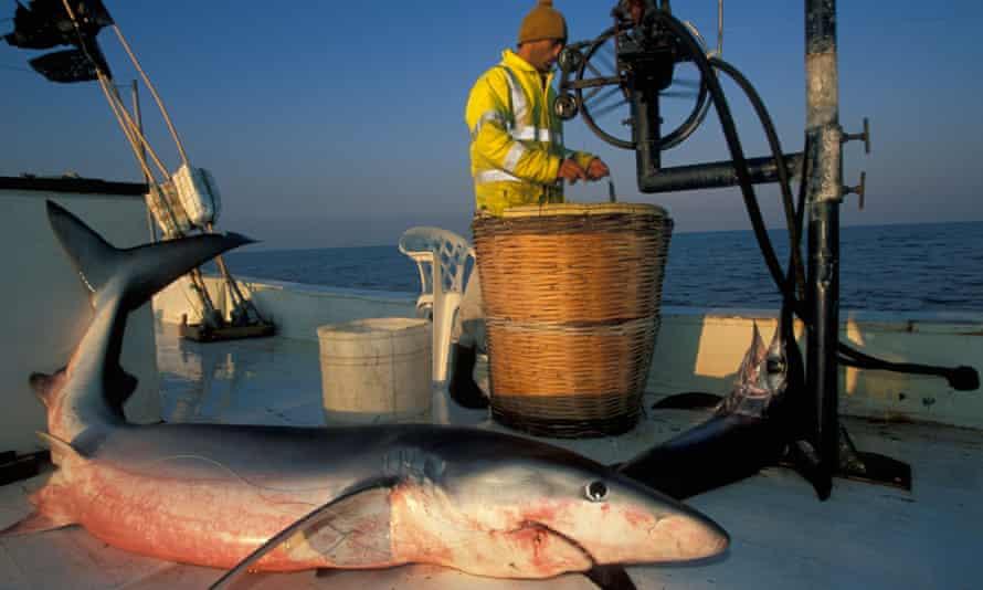 Shark fishing in Mediterranean Turkey