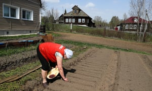 A woman plants seeds in her vegetable garden in the village of Gorki, Russia.