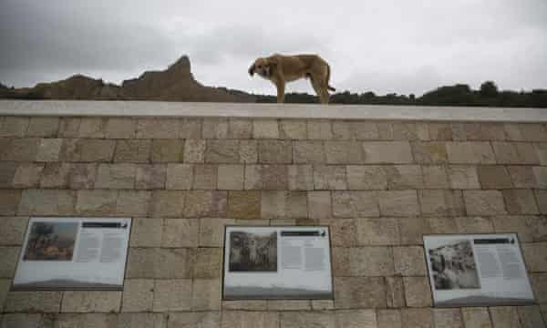 A stray dog live at Anzac Cove