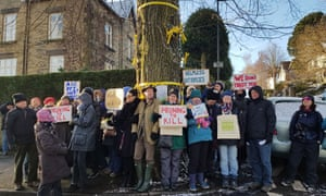 Protesters next to a rare Huntingdon elm in Sheffield, which is said to have survived Dutch elm disease.