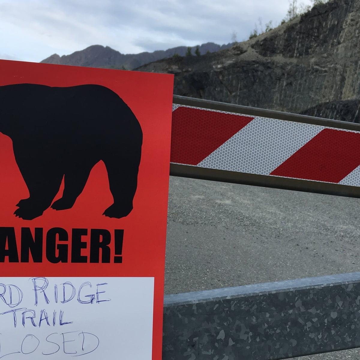 Rare Spate Of Bear Attacks Leaves Two Dead In Alaska Alaska The Guardian
