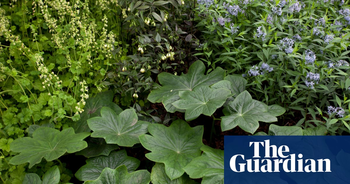 Out Of The Shadows Plants That Thrive In Shady Gardens Life And
