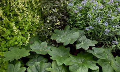 Out of the shadows: plants that thrive in shady gardens