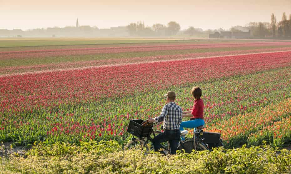 Visit the Netherlands and enjoy tulip fields by bike.