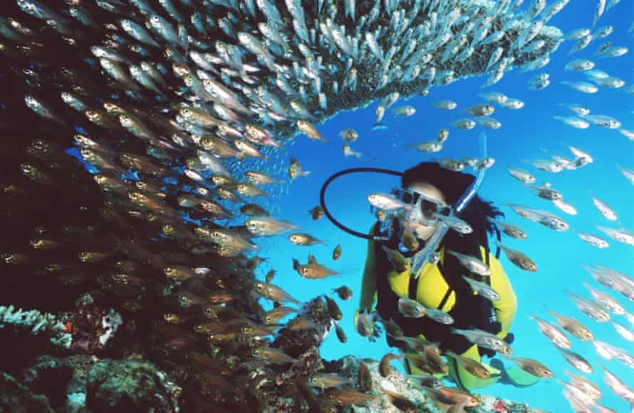 A scuba diver on the Great Barrier Reef