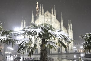 Iced decoration for a palm tree in Duomo Square, Milan