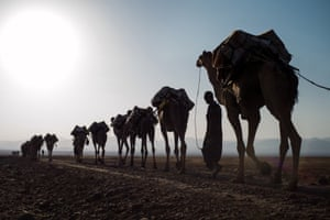 More than 2,000 camels are then loaded with the salt, which is transported to Berahile