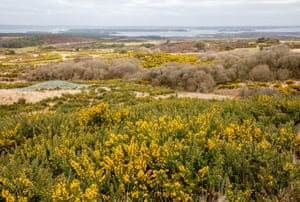 Purbeck Heath in Dorset