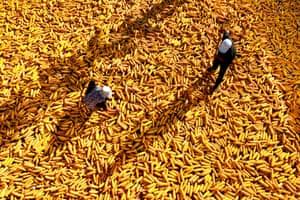 Farmers dry corncobs in Zibo, China