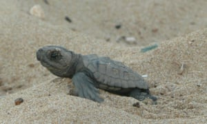 Protecting turtles in Greece with GVI