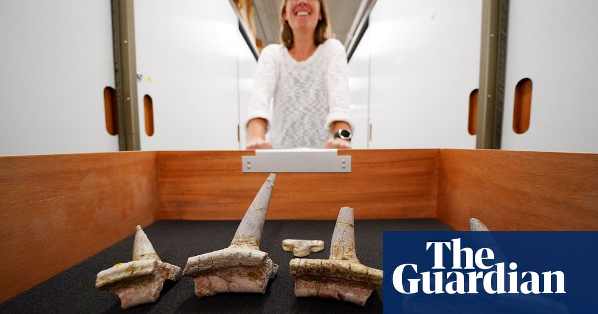 Dinosaur fossil with 'totally weird' spikes in skeleton stuns experts