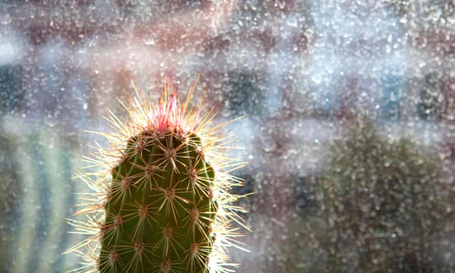 A cactus in Hanover, Germany.