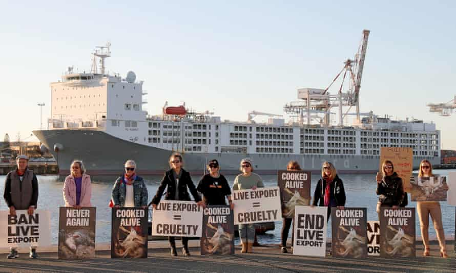 Animal welfare protesters are seen at a rally in front of the Al Kuwait live export ship as sheep are loaded in Fremantle harbour, 16 June, 2020