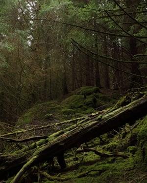 Into the woods … Eden