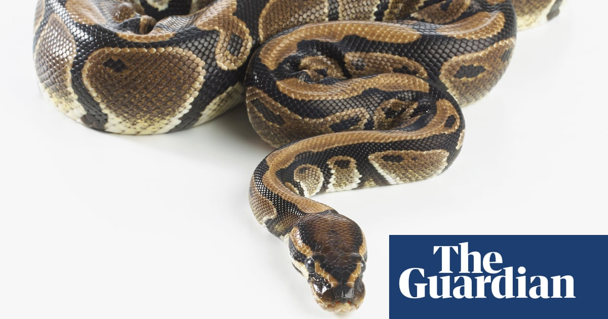 Scottish animal welfare baffled by python mutilation in Aberdeen