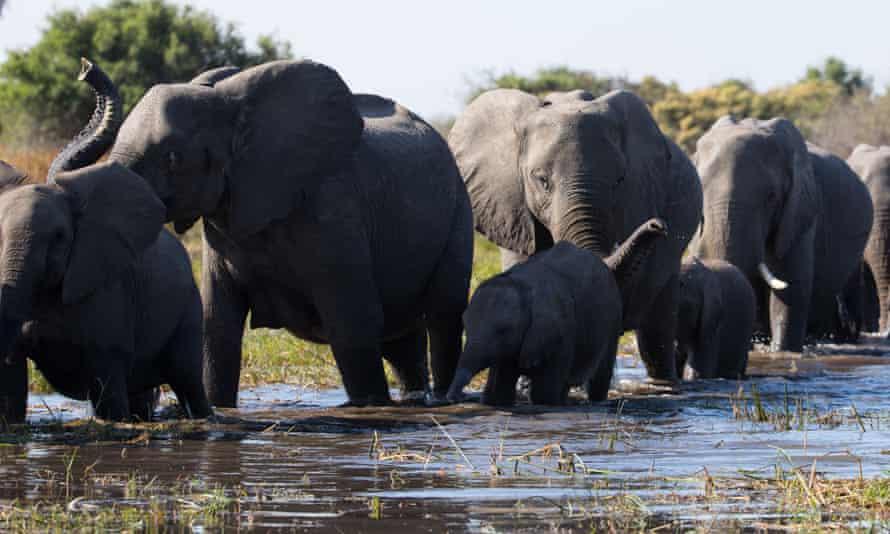 Dramatic ... Elephant.