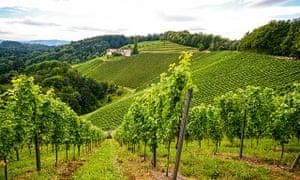 Taste of autumn: vineyardsalong the Rhône valley.