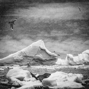 Ice and water with marine and bird life