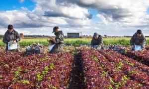 Seasonal EU workers