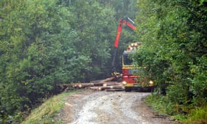 The EIA's 2015 report catapulted illegal logging to national prominence in Romania.
