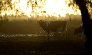 The companies examined by the report include Australian cattle giants and a Norwegian seafood company.