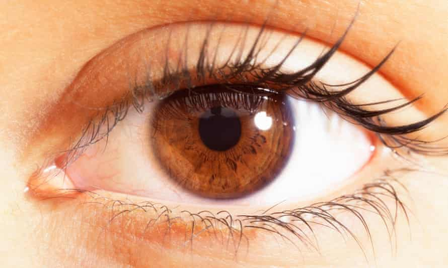 extreme close up of brown eyes.