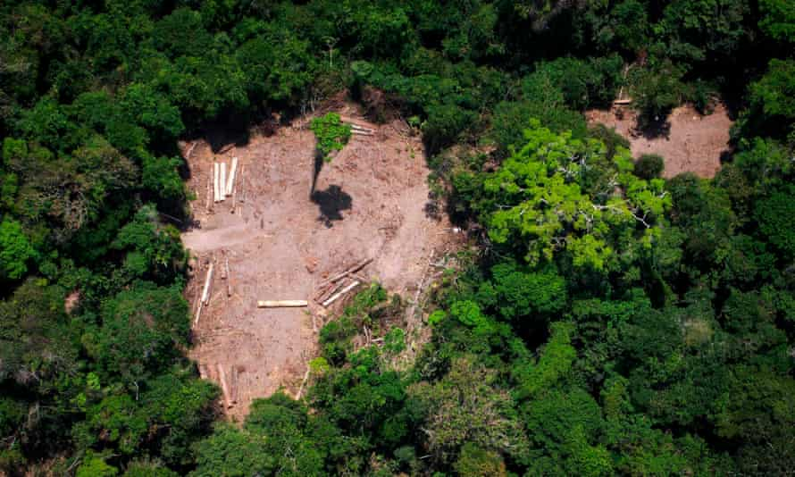 View of an illegal felling area in the Amazon forest. Ricardo Galvão says 'enormous' damage had already been done since Bolsonaro took power in January.