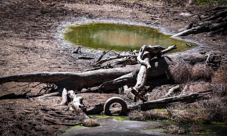 Drought strikes Gunnedah, in New South Wales, Australia.