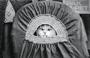 Show cat in travelling basket, National Cat Club Show, 1976 from Jane Bown: Cats