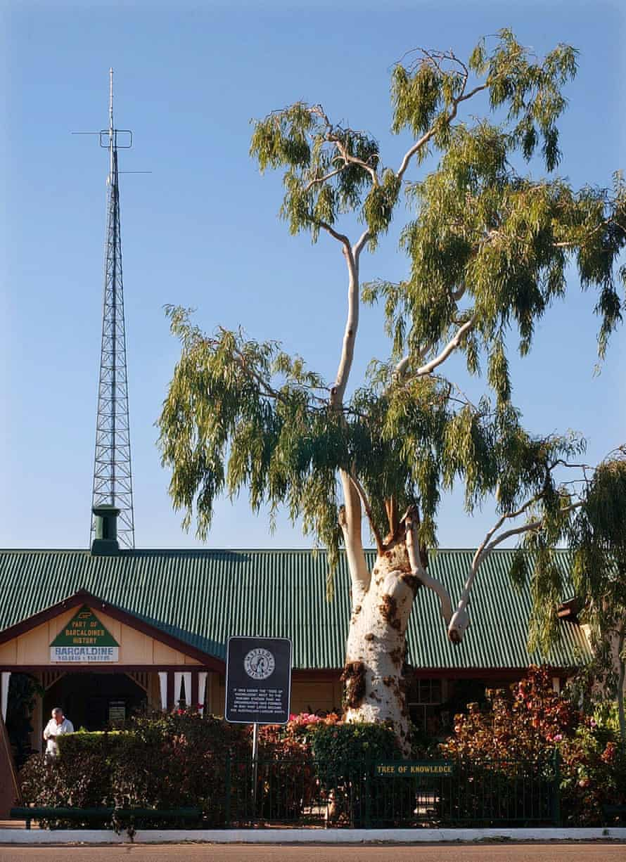 A 2003 image of the 'Tree of Knowledge', the historic 170 year old ghost gum that used to sit just outside the Barcaldine railway station in Queensland.