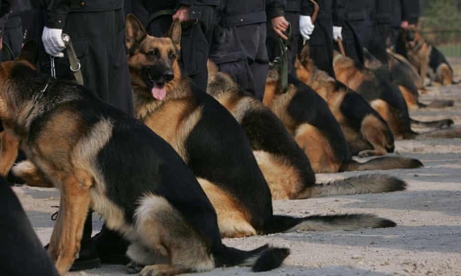 Police canines wait with their trainers at a police dog training base in Beijing