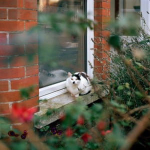 A cat that looked like Hitler. Ramsgate, Kent.
