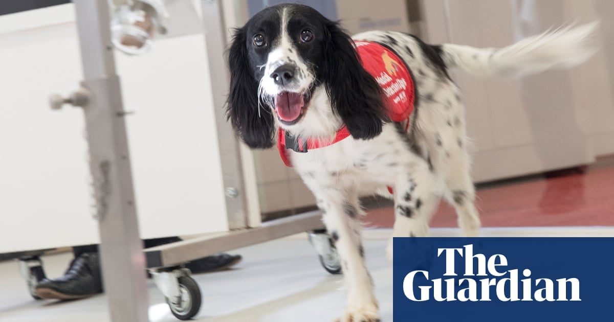 Truffles, ghosts and now malaria: things dogs can sniff out